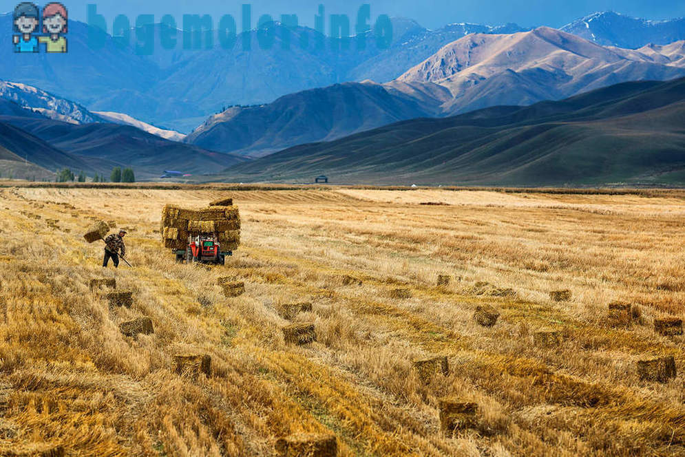 The Great Silk Road in the lens