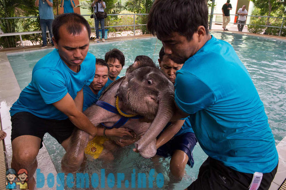 How to teach the elephant in the water to walk again