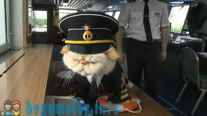 Zamurchatelny river cruise with a cat at the helm