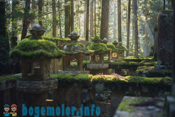 Walk on Mount Koya in Japan