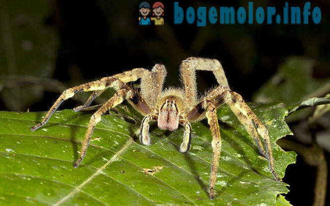 15 most dangerous spiders in the world