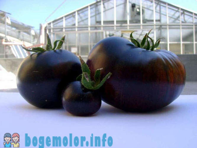 The most unusual fruits and vegetables on the shelves
