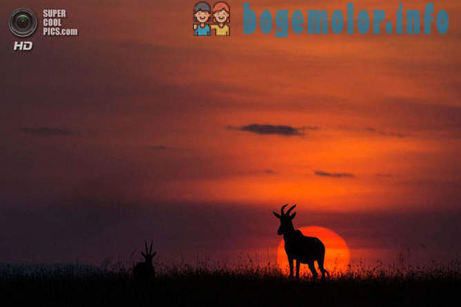 Sunsets and sunrises in the reserve Masai Mara