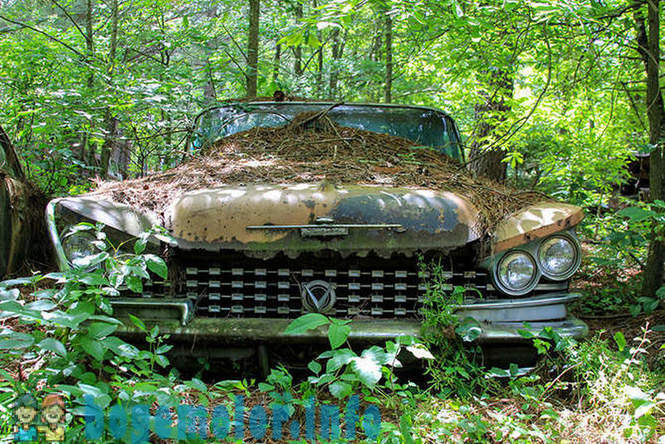 Walk on the biggest cemetery of old American cars