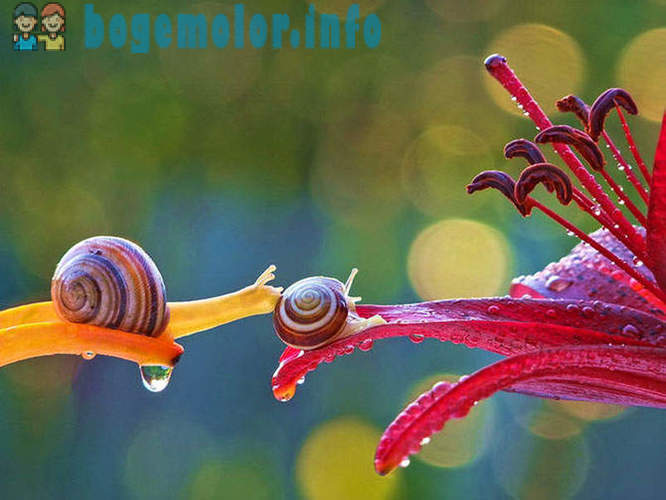 Snails Vyacheslav Mishchenko photos