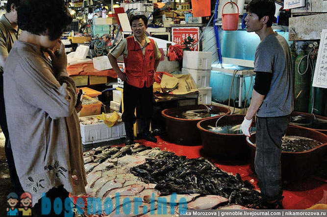 The famous fish market in Seoul